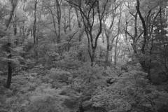 Miyazaki's Forest